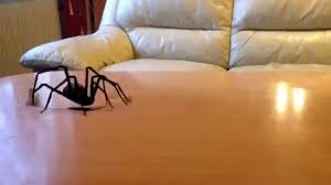 the livingroom attacked by a giant spider in the livingroom youtube