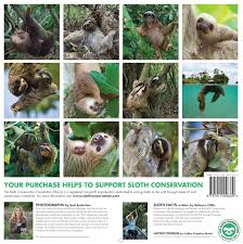 sloths 2018 wall calendar baby animal prints by suzi