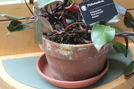 problems common to many indoor plants