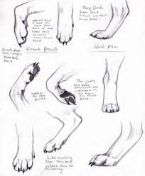 how to draw dog ears step 1 the ancestor of dogs a wolf has