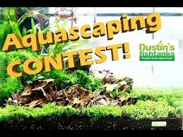 Aquascape Nj Planted Aquarium Design Aquascaping Contest New York 2017 Youtube