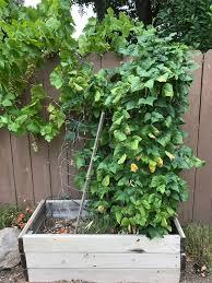 space saving garden tips organic gardening tips