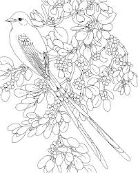 flower page printable coloring sheets and flower state bird