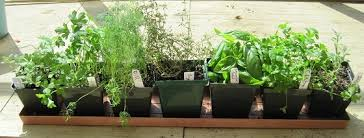 Window Sill Herb Garden Designs Window Herb Garden Gardening Design