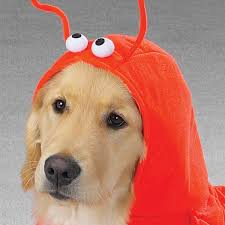 Halloween Costumes Golden Retrievers Lobster Dog Halloween Costume Casual Canine
