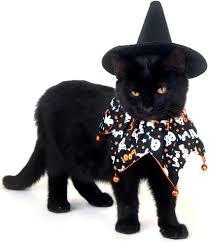 cat costume for halloween 10 of our favorite cat halloween costumes leesville animal hospital