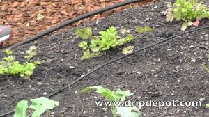 garden irrigation ideas garden design ideas