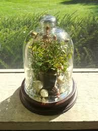 glass terrarium supplies the enchanted manor