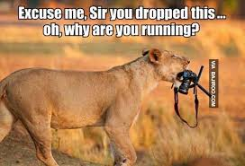 Camera Meme - funny lion with camera meme bajiroo com