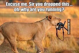 Meme Camera - funny lion with camera meme bajiroo com
