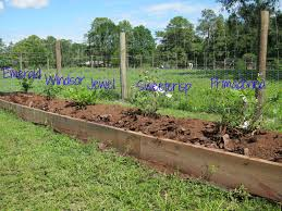 Strawberry Garden Beds Garden Design Garden Design With Bare Root Strawberry Plants