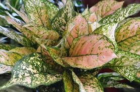 live healthy clean the air with house plants a2y chamber ann
