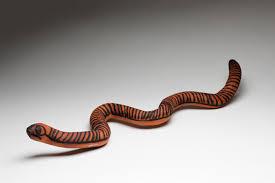 purnu wood sculptures national museum of australia
