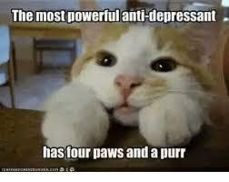 Depressed Cat Meme - 25 best memes about grumpy cat grumpy cat memes