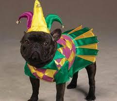 mardi gras jester ribbon dog for mardi gras bake two pie size g f pancakes infobarrel