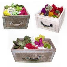 choose your own design succulents in wooden draw newport beach