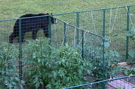 garden fencing protection from deer rabbit proof critter