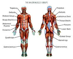 Muscles Used During Bench Press Understanding What A Push Pull Weight Training Routine Is And How