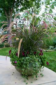 Best Flowers For Small Pots Garden Planter Purple Fountain Grass Pic Source Http Media