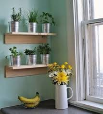 Indoor Wall Herb Garden Potted Plants On Bleacher Risers Terrasse Pinterest Plants