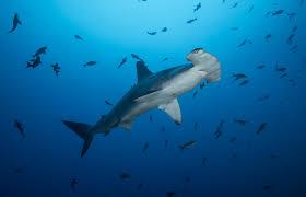 shark finning primer with a lifelong activist conservationist