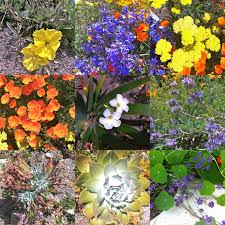 native plants california california native plants coastal deering design land