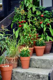 lousy soil try planting vegetables in pots tubs and cans