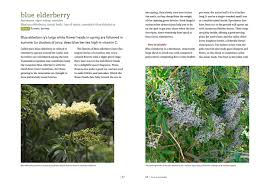 edible california native plants california foraging 3 species you didn u0027t know were edible