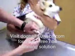 dog nail grinder how to trim nails youtube