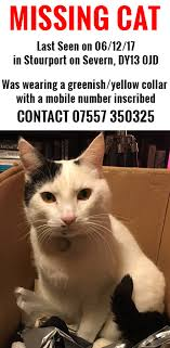 Missing Cat Meme - lost found pet advice from rspca kidderminster district branch