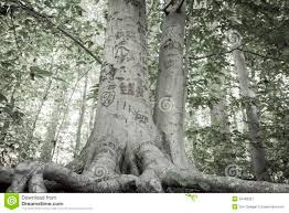 initials carved in tree tree stock image image of forest heart 34408321