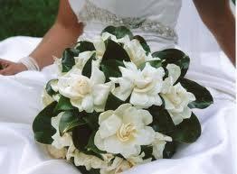 die besten 25 gardenia wedding arrangements ideen auf pinterest