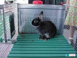 gabbie per conigli nani usate coniglio nano verde s r l