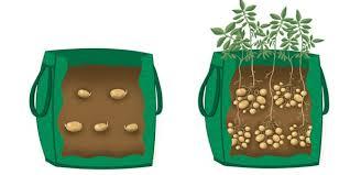 Patio Potato Planters 10 Ways To Grow Potatoes Potato Planting Ideas Balcony Garden Web
