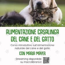 alimentazione casalinga gatto chi sono dr mayer