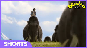 cbeebies andy u0027s prehistoric adventures woolly mammoth tusk