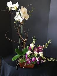 orchid flower arrangements orchid plant with orchid flowers jpg