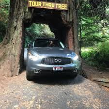 Chandelier Tree Address Tour Through Tree Klamath Ca Top Tips Before You Go With