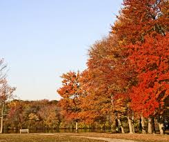 New England Foliage Map by Northeast Fall Foliage Trips You Have To Take At Least Once Your Aaa