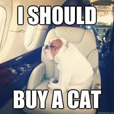 Rich Cat Meme - rich dog memes quickmeme