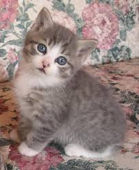 picture of a cute kitty so