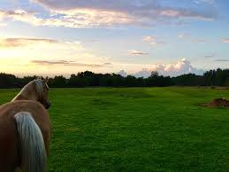 dayton area horse properties equestrian properties for sale in ohio