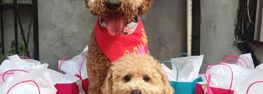 Good Backyard Pets D B A East Village 195 Tips From 12950 Visitors
