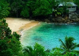 beach palm sand water paradise trees island hidden house