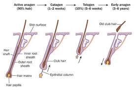 heavy pubic hair hair loss alopecia causes symptoms and treatment