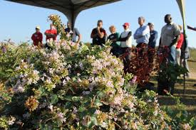 caes news horticulture field day