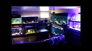 my home aquarium youtube