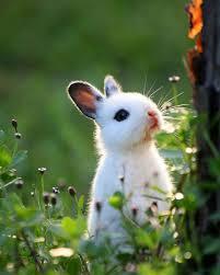 rabbit bunny 35 of the cutest bunny rabbits are cuteness
