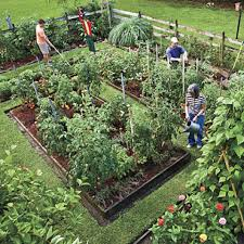 1000 images about raised vegetable gardens on pinterest gardens