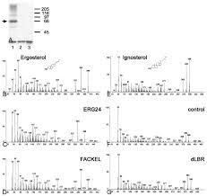 the lamin b receptor of drosophila melanogaster journal of cell